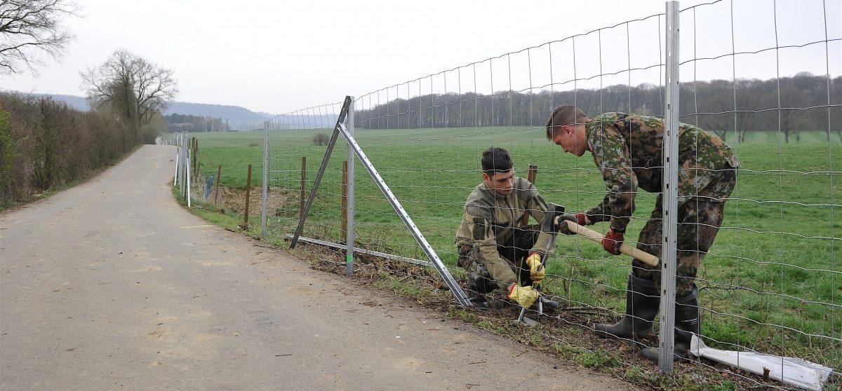Keine 100 Prozentige Garantie Armee Baut Zaun Gegen Afrikanische Schweinepest Tageblatt Lu Tageblatt Lu