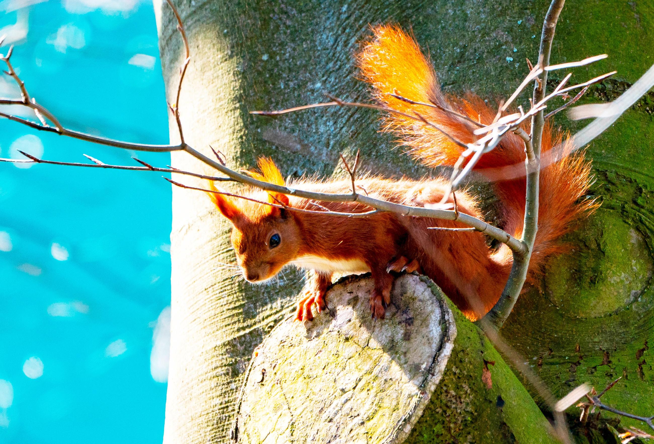 tiere  kobel im blumenkasten wenn eichhörnchen auf dem